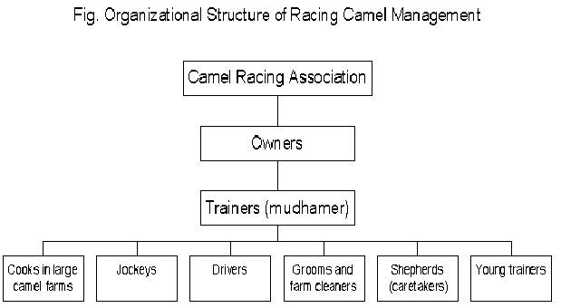 Camel Racing Association heirarchy